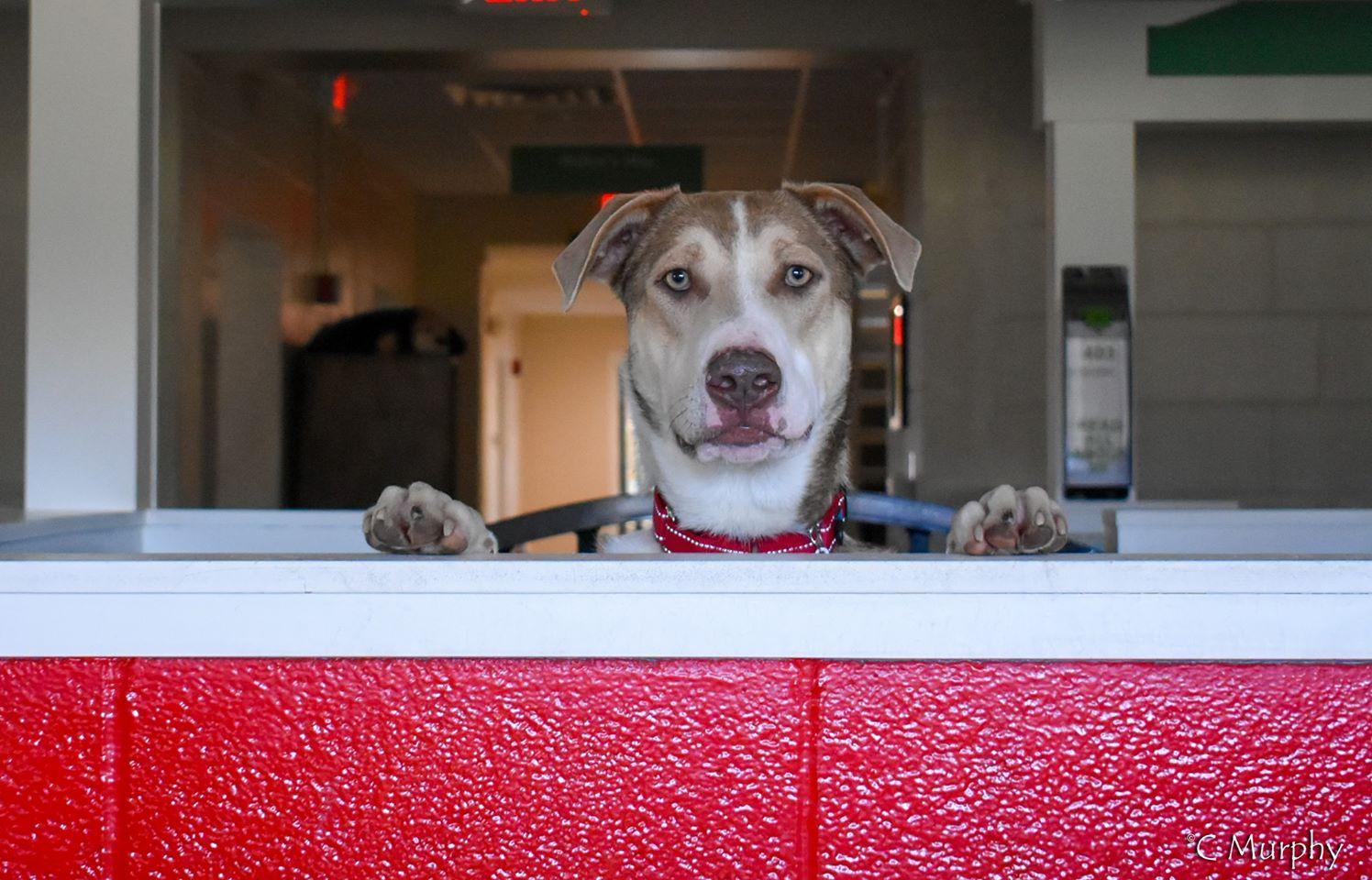 PRSA Helps Dogs
